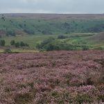 Dritti al cuore dell'Inghilterra: viaggio nello Yorkshire delle sorelle Brontë.